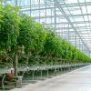خرید تجهیزات گلخانهای، چیزهایی که لازمتان خواهد شد
